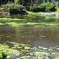 柿田川中流域の景色2