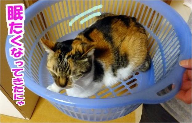 睡魔に襲われるネコ