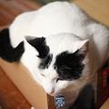 写真: オレ、箱猫