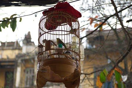 2012.03.12 ハノイ 旧市街 籠の鳥