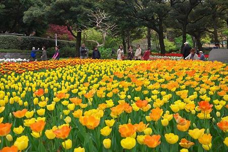 2012.04.19 横浜公園 チューリップ 千客万来