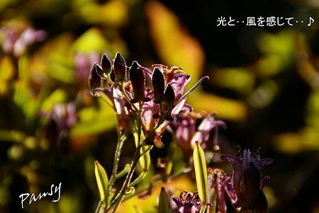 秋陽とホトトギス・・1