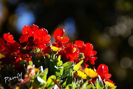 朝陽に微笑む花たち・・