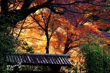 秋の名残り・・冬の明月院・・11