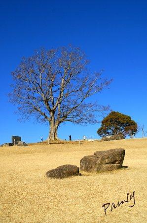 榎(えのき)の大樹・・