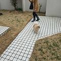 Photos: 庭だと楽しんでる!