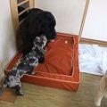Photos: ナナの為に用意してくれた高級ベッド~~!