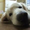 Photos: やっぱ、かわいい~~♪