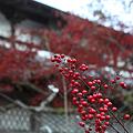 写真: 円通寺 - 06