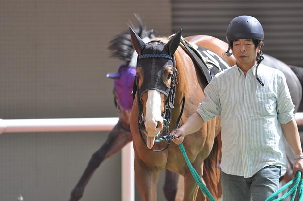 ぺろ2(Akino Mogul)