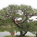 Photos: 110513-21栗林公園・夫婦松