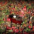 Photos: 燗銅壺と花見 椿と翔鶴