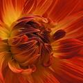 花フェスタ C5618