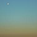Photos: 朝の月