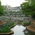 夜宮公園の花菖蒲(6)