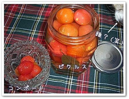 トマトのその後