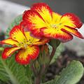Photos: 20120327花いろいろ03