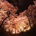 Photos: 桜`12予告編-2