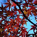 Photos: 紅葉賑わい