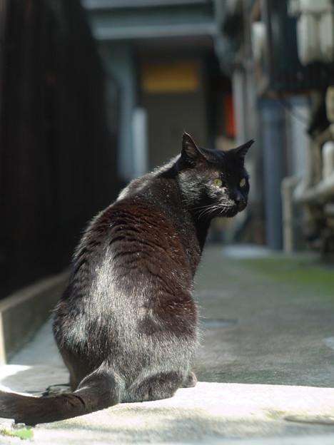 銀座_黒猫