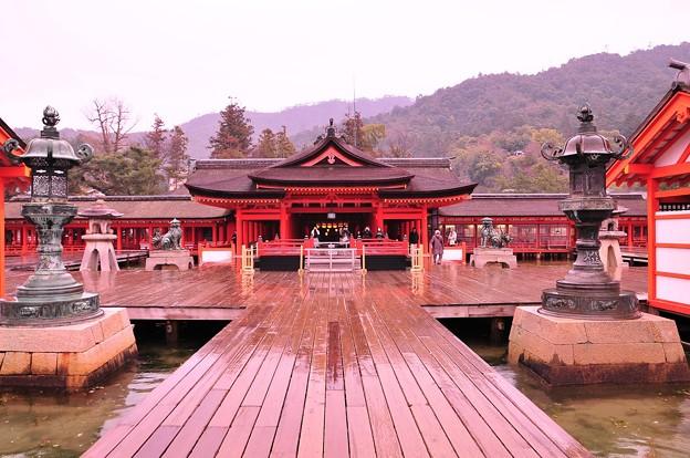 朝の雨降る厳島神社正面・・・