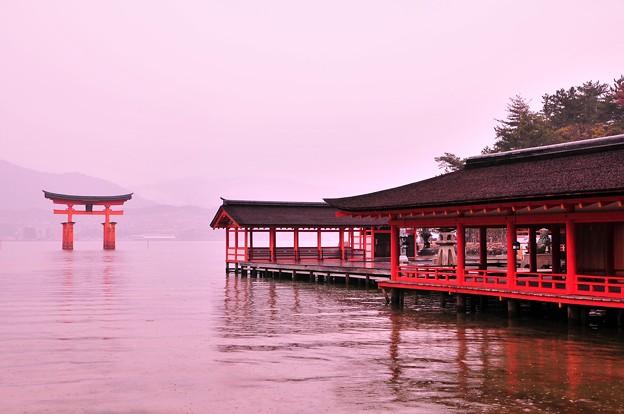 朝雨降る満潮時の厳島神社から鳥居を見て・・