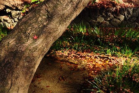 下鴨神社の紅葉(D90)-1