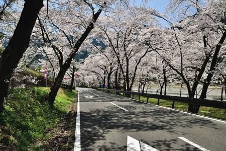 下北山村の桜・2