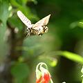 5月20日 庭の蝶