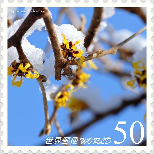 <花切手*シナマンサクの花>