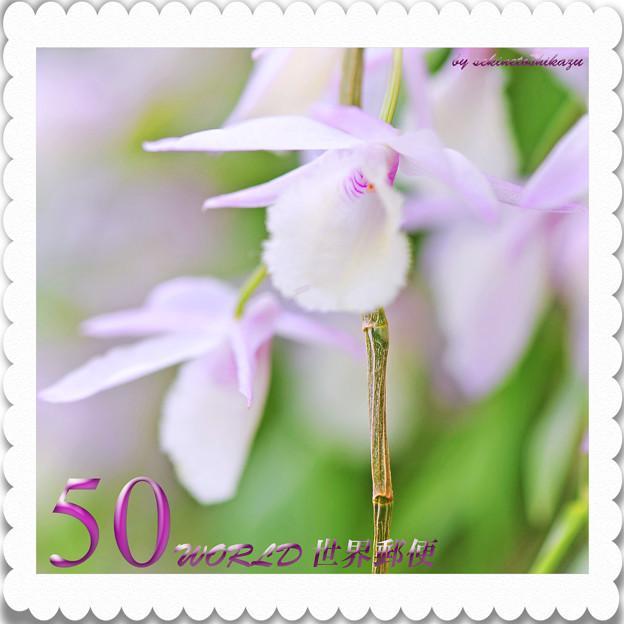 <花切手*デンドロジウム・アフィラム*紫の誘惑>