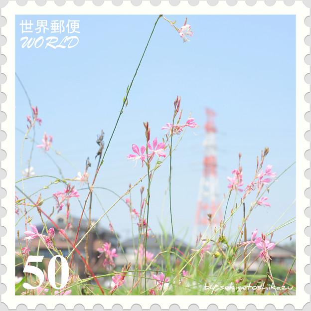 <花切手*山桃草 on 世界郵便>