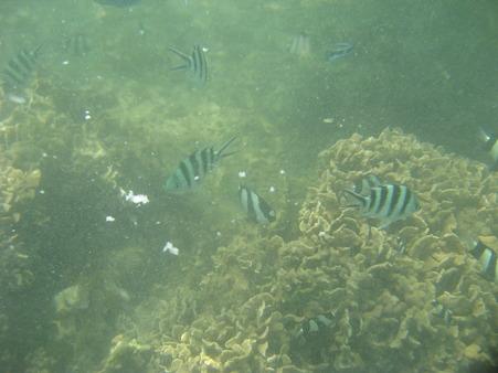アルパット島近くで熱帯魚その11