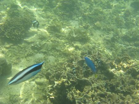 アルパット島近くで熱帯魚その14