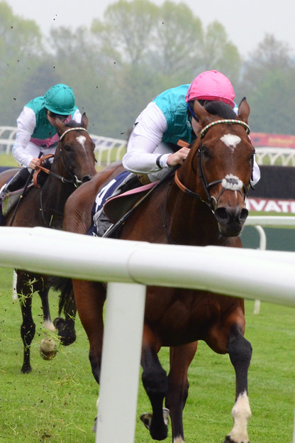 11.Frankel powers into top gear and Excelebration simply couldn't go with him -Lockinge Stakes-